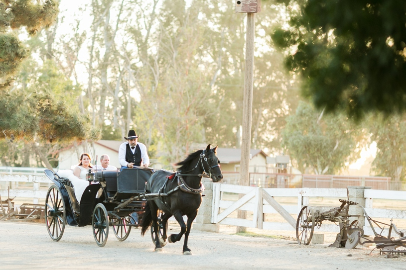 bride being brought to her wedding ceremony in a rustic horse and carriage at the double t in stevinson california by matthew leland photography